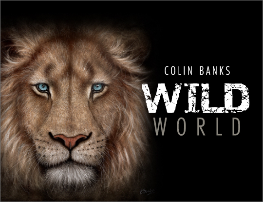 Colin Banks - The Wild World image